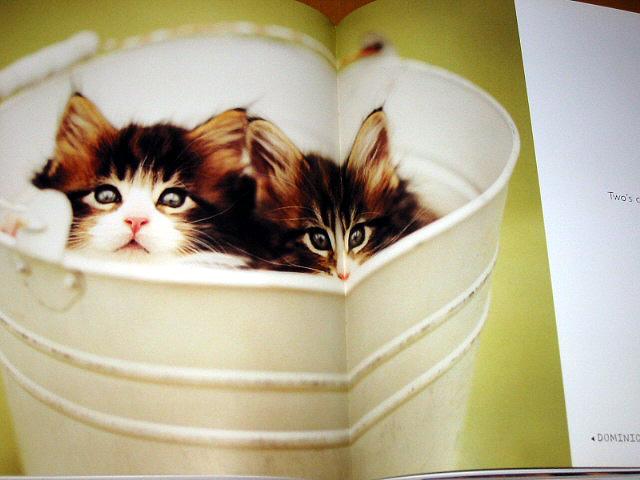 美食书本内容排版设计